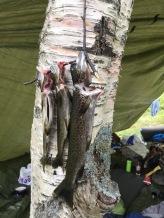 Erlend og Steigen er noen luringer med fiskestengene