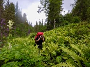 Ole tråkler seg gjennom bregneskogen.